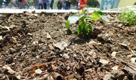 Еко башта у нашој школи